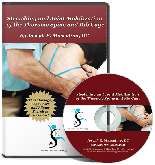 Stretching And Joint Mobilization Of The Thoracic Spine