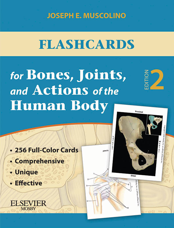 Flashcards-bones-joints