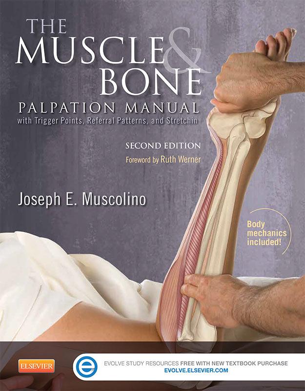 muscle-and-bone-palpation