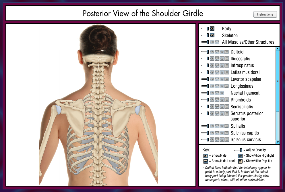 shoulder girdle quiz