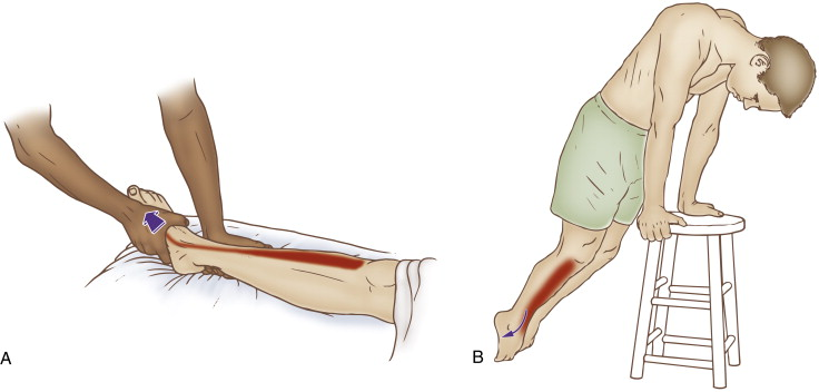 Self-care (and therapist assisted) stretch for the tibialis anterior. Permission: Joseph E. Muscolino. The Muscle and Bone Palpation Manual (Elsevier), 2016.
