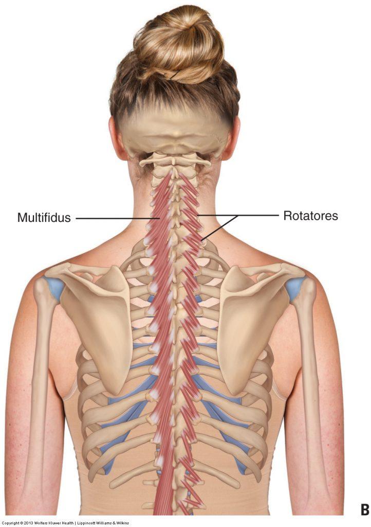 Als Frozen Shoulder englisch gefrorene Schulter  Syn schmerzhafte Schultersteife adhäsive Kapsulitis DuplaySyndrom bezeichnet man eine weitgehende schmerzbedingte Aufhebung der Beweglichkeit des Schultergelenks