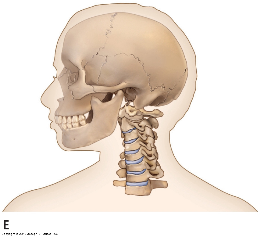 Axial and nonaxial ranges of motion of the Cervical Spine