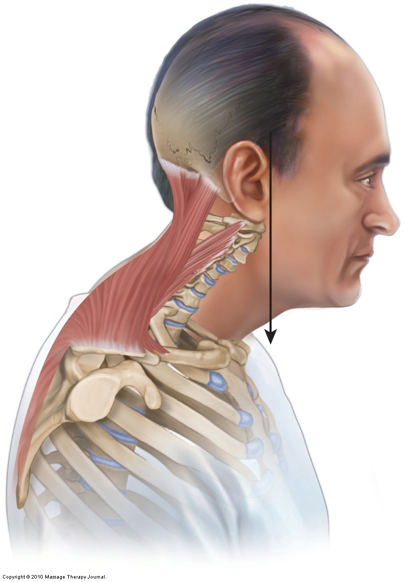Forward Head Posture on Position Words
