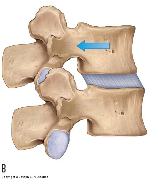 motions of the joints of the lumbar spine