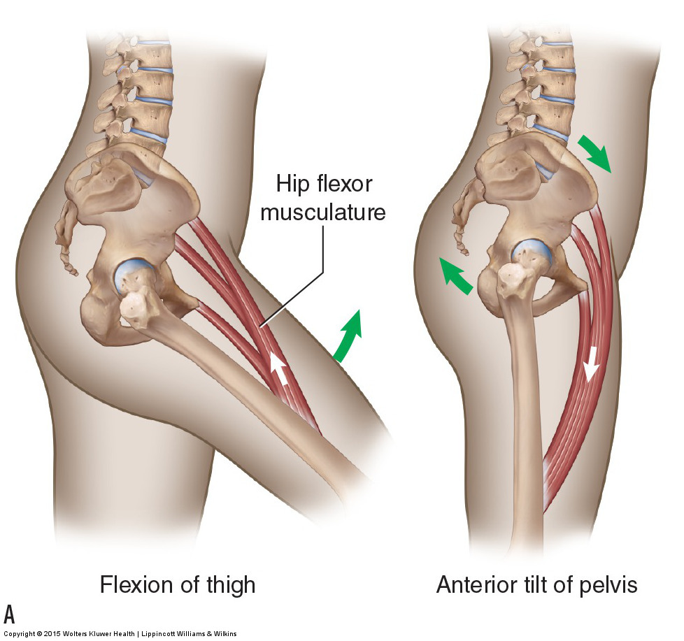 standard (open chain) and reverse (closed chain) motions at the hip joint