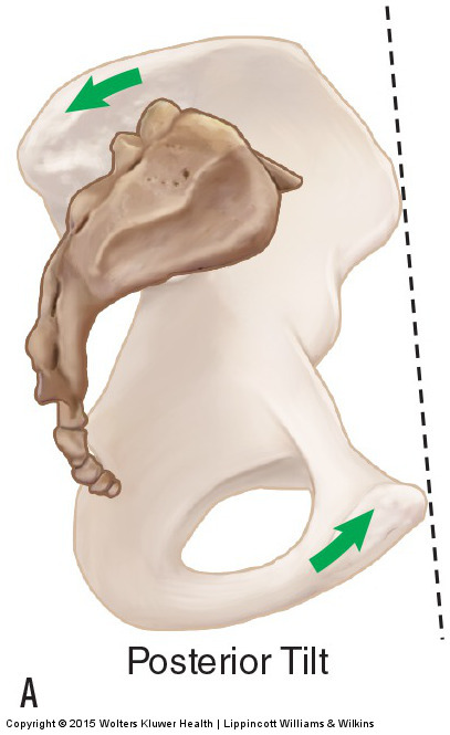 Motions of the pelvic bone at the sacroiliac joint