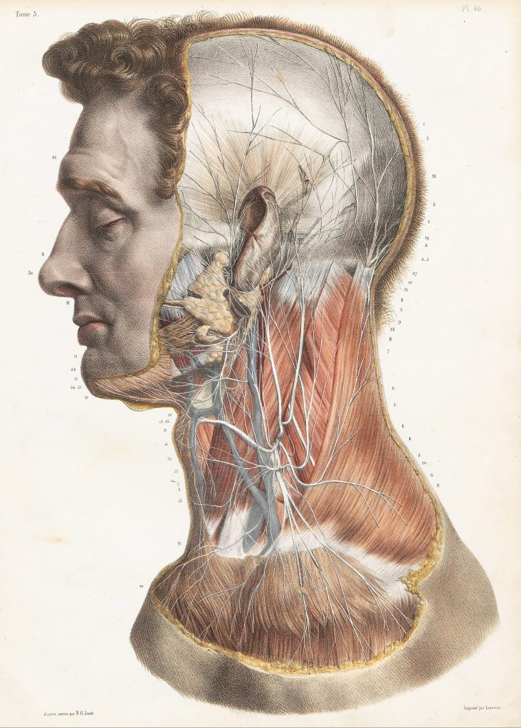 Lateral view of the head and neck with nerves shown