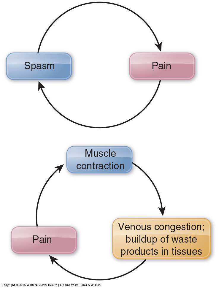 pain spasm pain cycle & tight musculature and venous return