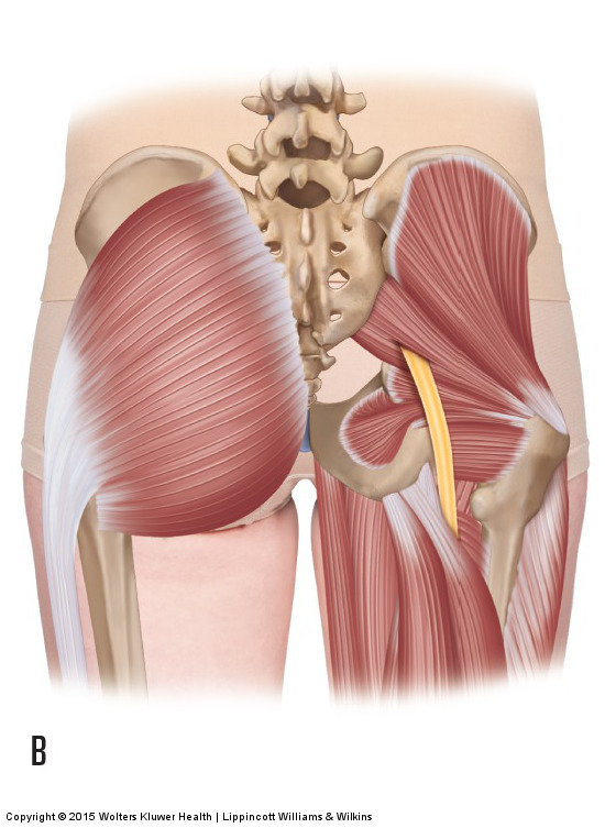sciatic nerve piercing the piriformis