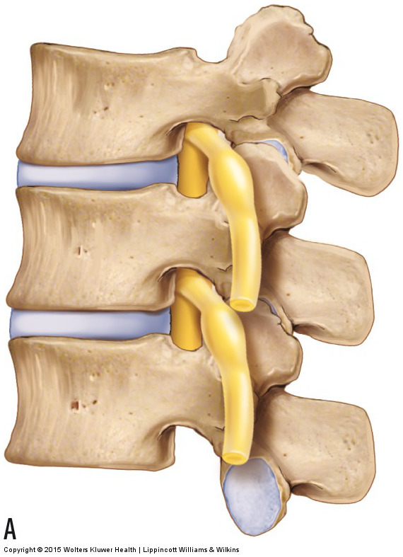 Lateral view of the lumbar spine