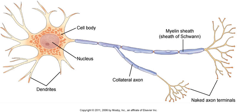 Neuron figure