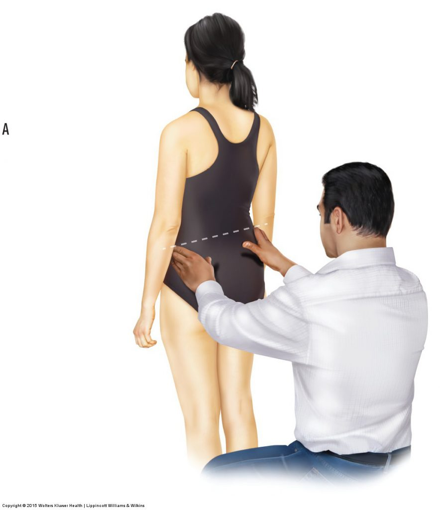 Muscle And Bone Palpation Of The Low Back And Pelvis